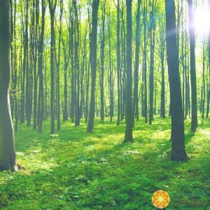 lifespa-image-nature-forest-trees-green-sun